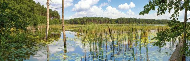 Wo See- und Fischadler jagen
